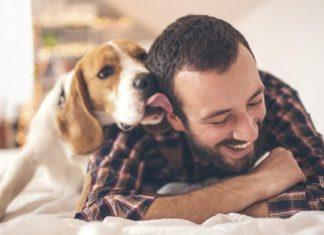 Conoce los beneficios de tener una mascota