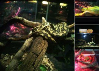 profesa-pone-en-regla-a-six-flags-tenia-62-reptiles-ilegales
