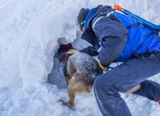 Rescatan a niño que estuvo sepultado 40 minutos tras avalancha