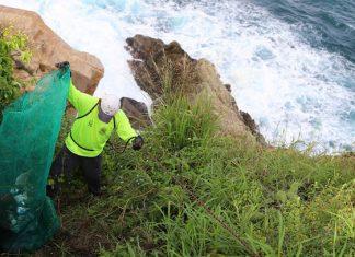 En Acapulco, recolectan más de 273 toneladas de basura