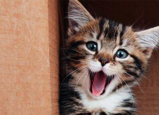 Cinco razones científicas para tener un gato