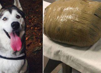Dejó a su perra en guardería canina; se la devuelven muerta en un paquete