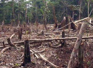 México, país con más especies en peligro de extinción