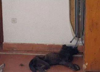 Mujer dejó morir de hambre a perro en una terraza