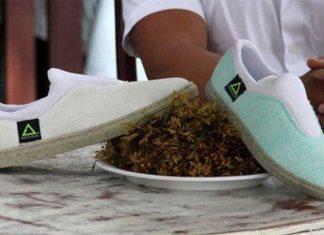 Renovare, la empresa mexicana que transforma el sargazo en zapatos