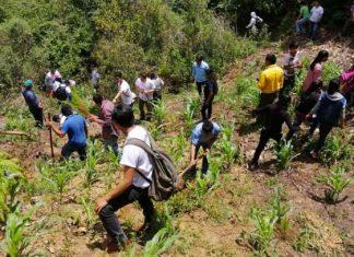 Reforestan con 5 mil árboles reserva 'La Laguna', en Chiapas