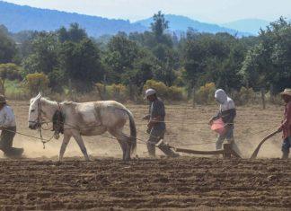 Campo mexicano en crisis, sin una innovación sustentable