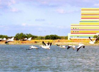 Reynosa, en riesgo de perder su biodiversidad
