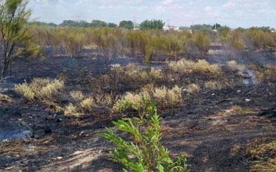 Canícula multiplica incendios en baldíos