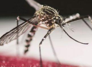 ¿Por qué me pican los mosquitos? ¿Qué los atrae?