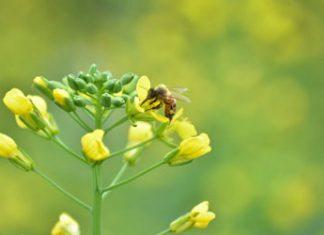 Será Llera productor de miel