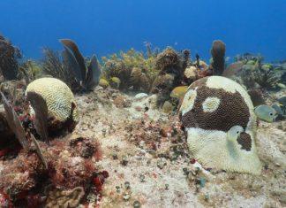 Cierran zona de arrecifes en Cozumel