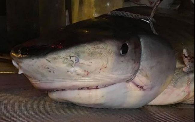 Encuentran mano de turista desaparecido en estómago de un tiburón