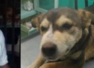Muere perra violada por hombre de 53 años