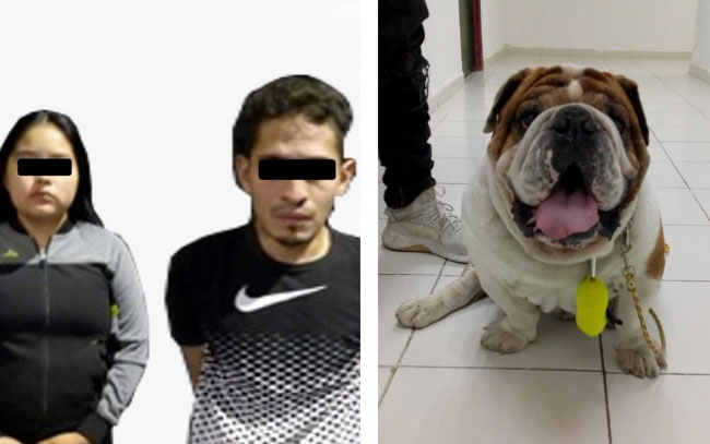 Perrito 'Emilio' iba a ser sacrificado por secuestradores