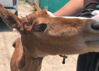 Durante crisis por coronavirus dejan en abandono a animales en Ciudad Madero
