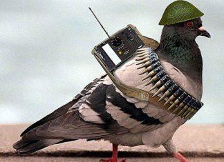 """La India captura paloma """"espía"""", pakistaníes responden con memes"""