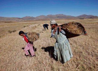 Los anillos de 15.000 árboles revelan las sequías de 600 años en Sudamérica