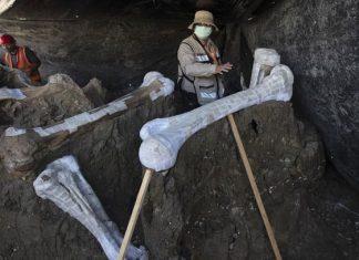 Suman 200 esqueletos de mamut hallados en Santa Lucía