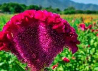 Cierre de panteones golpe a florerías