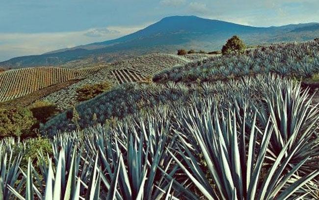 Emprenden proyecto integral en sitio arqueológico en volcán de Tequila