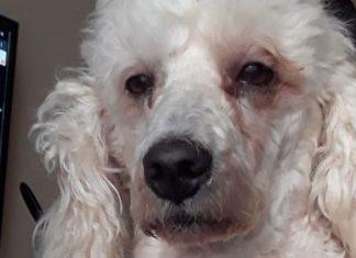 Perrito con cara de desvelado se hace viral