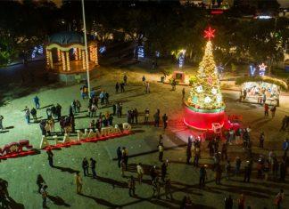 Encienden pino navideño en la Plaza Principal
