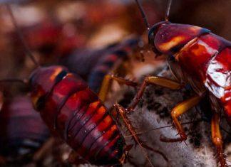 Es mito o realidad que las cucarachas sobrevivirían a una guerra nuclear?