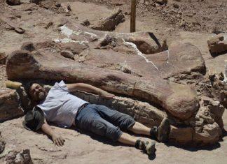 Fósil de dinosaurio encontrado en Argentina, es el más grande de la historia