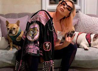 Hieren al paseador de perros de Lady Gaga y secuestran sus bulldogs