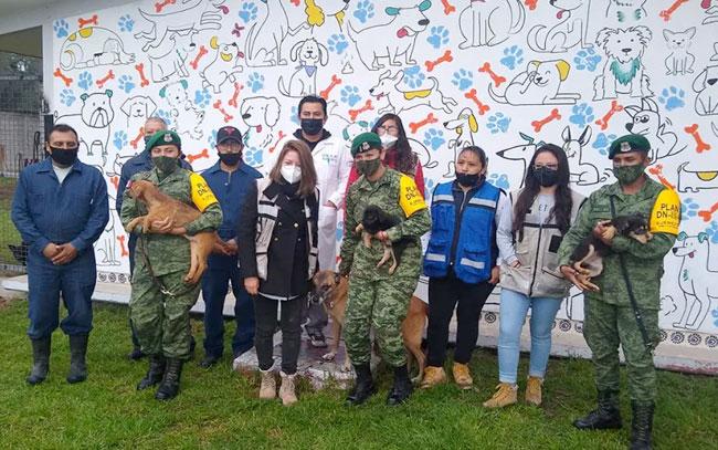 Militares dan refugio a perros que deambulan en obras de Santa Lucía