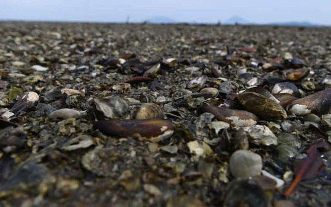Ola de calor deja más mil millones de criaturas marinas muertas
